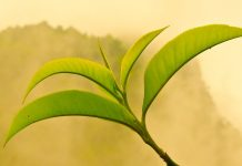ceai verde beneficii